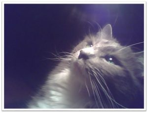 Trixie the Wondercat