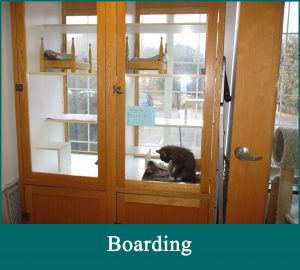 Boarding service is provided to our clients' cats.
