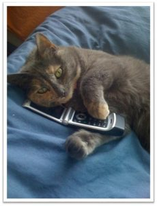 Cat holding a cell phone.