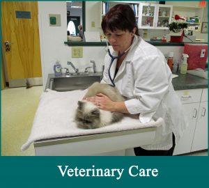 Veterinarian providing cat-only veterinary care.